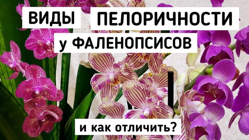 КАК отличить ОРХИДЕЮ БАБОЧКА ПЕЛОРИК ТРИЛИПС БАБУЛЕТКА БИГ ЛИП мутация орхидея orchid фаленопсис