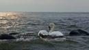 Baltijos jūros saulėlydis loveklaipeda