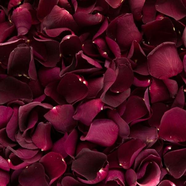 Картинки розы лепестки роз