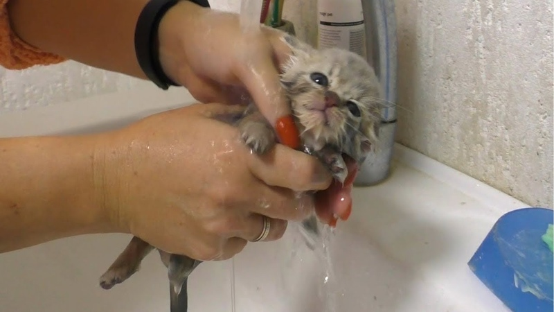First bath and Feeding a weak street kitten - Whole story of rescue