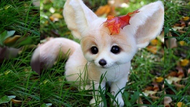 Повадки лисы фенек Лиса фенек с котом и собакой Маленькая домашняя лисичка фенек fenek fox fennec