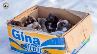 Щенки посреди поля! Как же они выжили в мороз? История спасения восьмерых маленьких собачек...