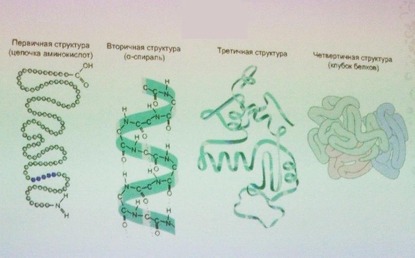 Структура пептидов
