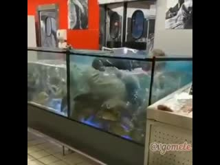 В Гомеле парень сделал девушке предложение - а она выбросила кольцо в аквариум. Пришлось лезть за ним туда