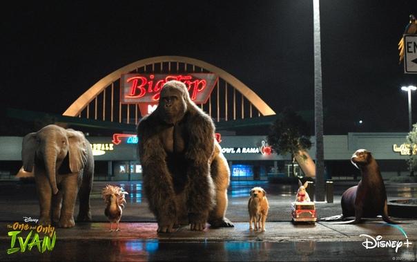 Свежий кадр фильма «Айван, единственный и неповторимый» от Disney