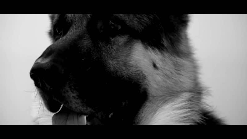 ЧЕЛОВЕК И СОБАКА хотите плакать смотрите По рассказу Прости меня пёс Юлии Тимониной