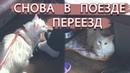 ПЕРЕЕЗД В ДРУГОЙ ГОРОД С КОШКОЙ Cats relax