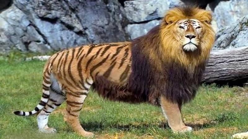 اغرب 10 حيوانات مهجنة فى العالم غير معروفة