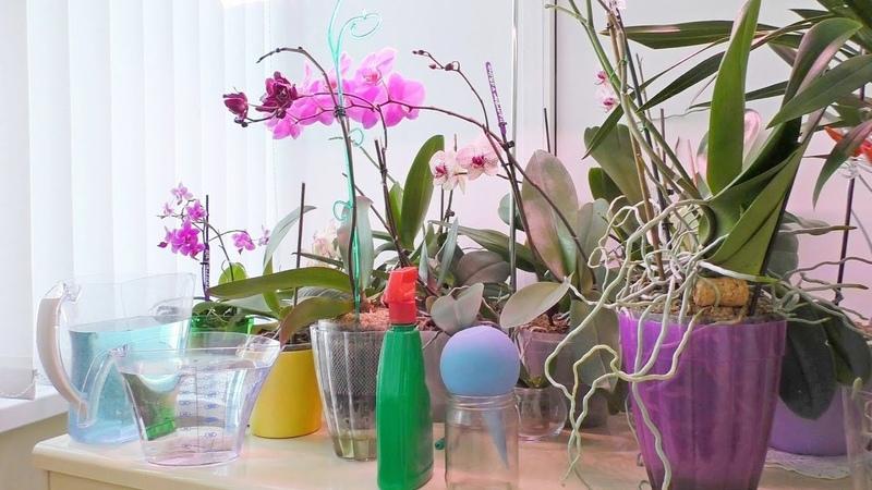 Поливаю орхидеи с удобрением. Удобряю ли цветущие Цеофлора - особый компонент грунта и это важно.