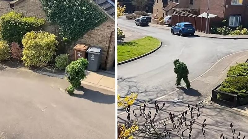 Британец прикинулся кустом ради выхода из дома в карантин