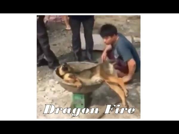 Китайцы запрещают показывать это видео! Достоин Просмотра