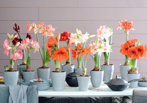 Период покоя комнатных растений