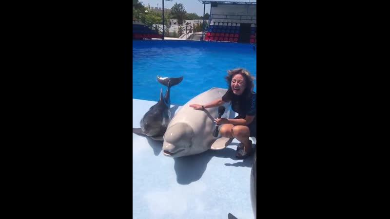 Смешная ситуация приключилась с журналистом в дельфинарии