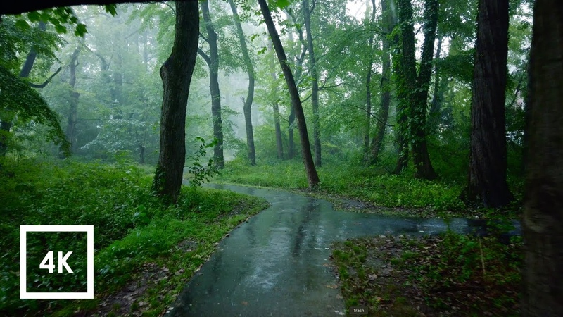 Relaxing Walk in the Rain, Umbrella and Nature Sounds for Sleep and Relaxation   4k ASMR