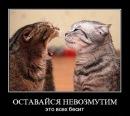 Фотоальбом человека Алексея Лобина