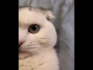 А во сколько Вас будят утром ваши коты