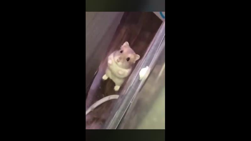 Не бойся я тебя не буду есть я уже летучую мышь съела😂😂😂