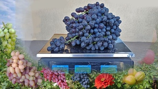@Чи знаєте Ви виноград? Перевір сам себе. Вип. 8