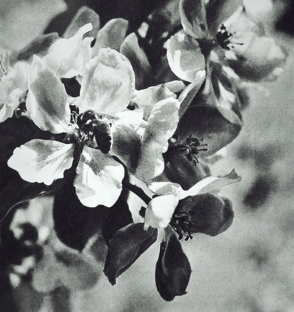 фото из альбома Дмитрия Самойлова №10