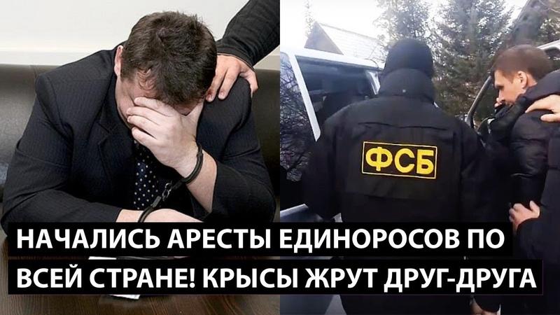 Аресты единоросов по всей стране КРЫСЫ ПОЖИРАЮТ ДРУГ ДРУГА