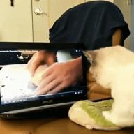 id_65582 Котик учится месить тесто 😊 И никаких отмазок про лапки 😋  #юмор@bon #видео@bon