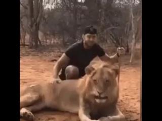 Лев чихнул, а мужик обделался...Пчи  ) (360p).mp4