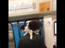 Перегон между станциями Отрадное и Владыкино. Кот едет без переноски.