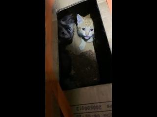"""Видео от """"Ищу друга"""". Помощь бездомным животным Арзамаса."""