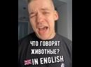 Как разговаривают животные на английском