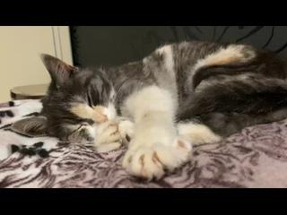 Видео от Бездомные животные. г.Нелидово