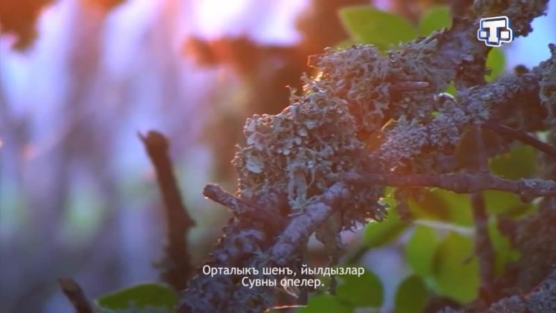 Шиирлер. Эшреф Шемьи-заде Гедже Выпуск от 05.03.2020