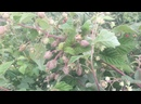 Видео от Веры Чирковой-Мокрушиной
