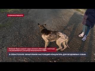 30_11 Живые скелеты и трупы щенков в Севастополе проверили приют бездомных животных _ЧИВ