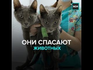 Как в Москве и Питере спасают животных — Москва 24