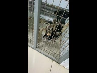 Приют для животных без владельцев в г. Надым kullanıcısından video