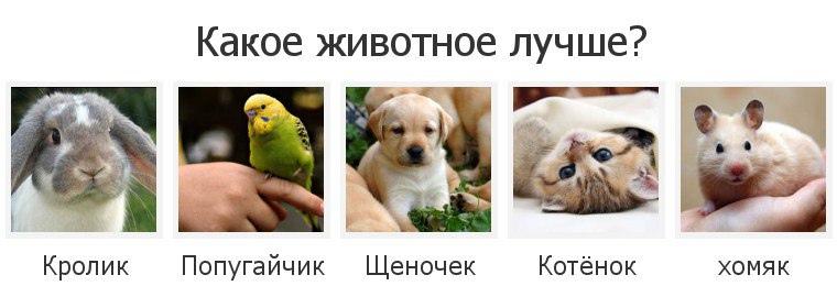 фото из альбома Руслана Галяутдинова №10