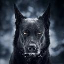 Персональный фотоальбом Дмитрия Белова