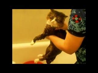 Кот матюкается во время купания)