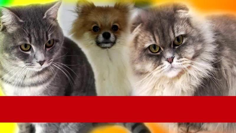 КОШКА КОРМИТ НОВОРОЖДЕННЫХ КОТЯТ. Смешные животные