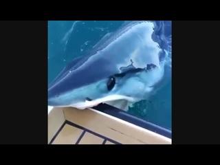 А вы когда то видели как у детеныша акулы режутся зубки