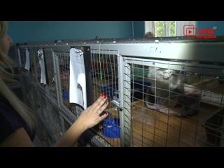 Безнадзорных животных Саранска – посетили гости