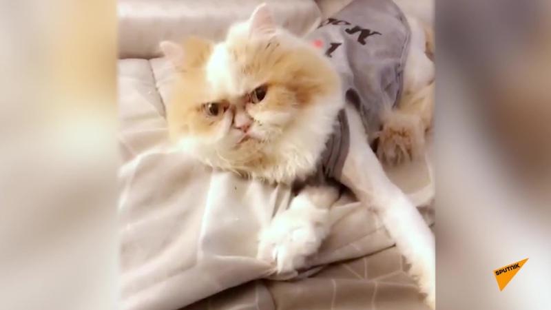 Новый Grumpy Cat