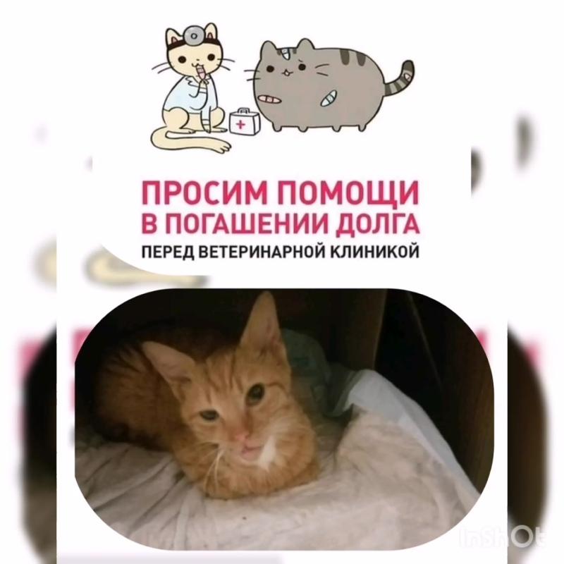 InShot_20200323_145658155.mp4