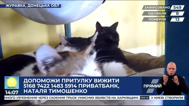 Репортер - На Донеччині притулок для тварин потребує допомоги