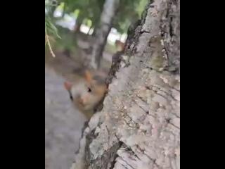 Video von АКАДЕМГОРОДОК LIVE