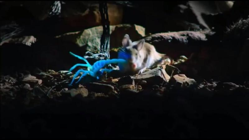 хомяк умял скорпиона