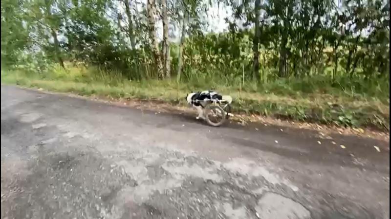 Видео от Мордашки