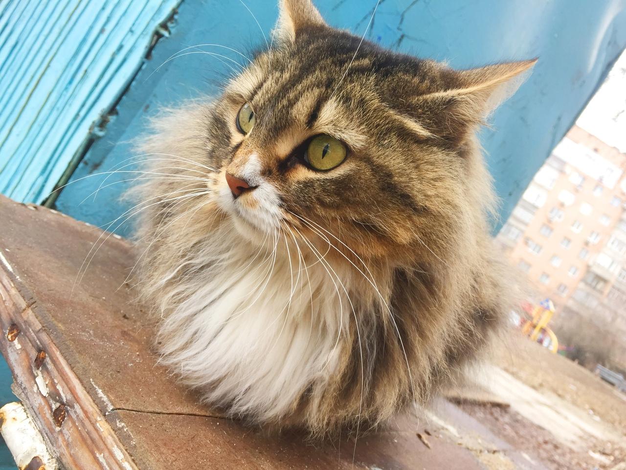 ‼🆘‼ Помогите найти дом этой замечательной кошечке ‼🆘‼