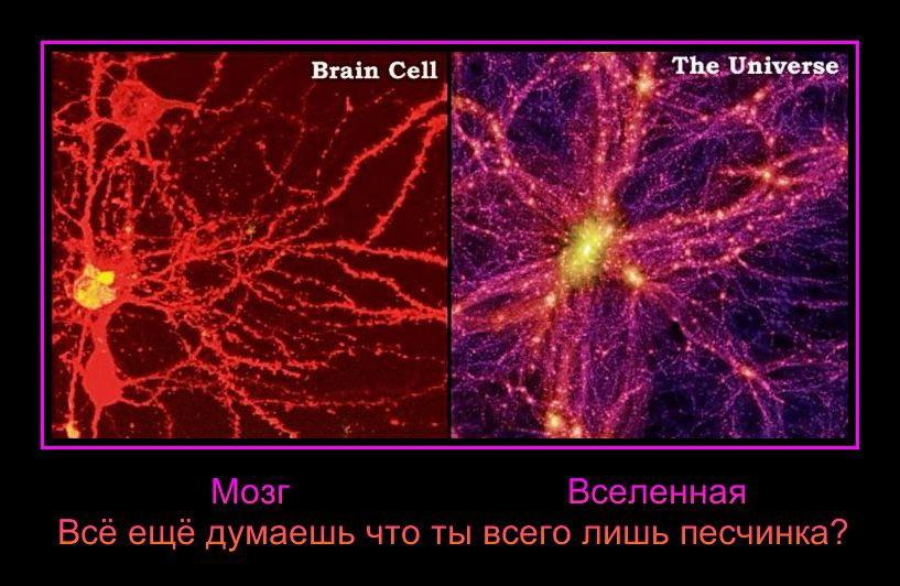 Живая разумная вселенная. Заблуждения науки  AFMgBmF-smQ