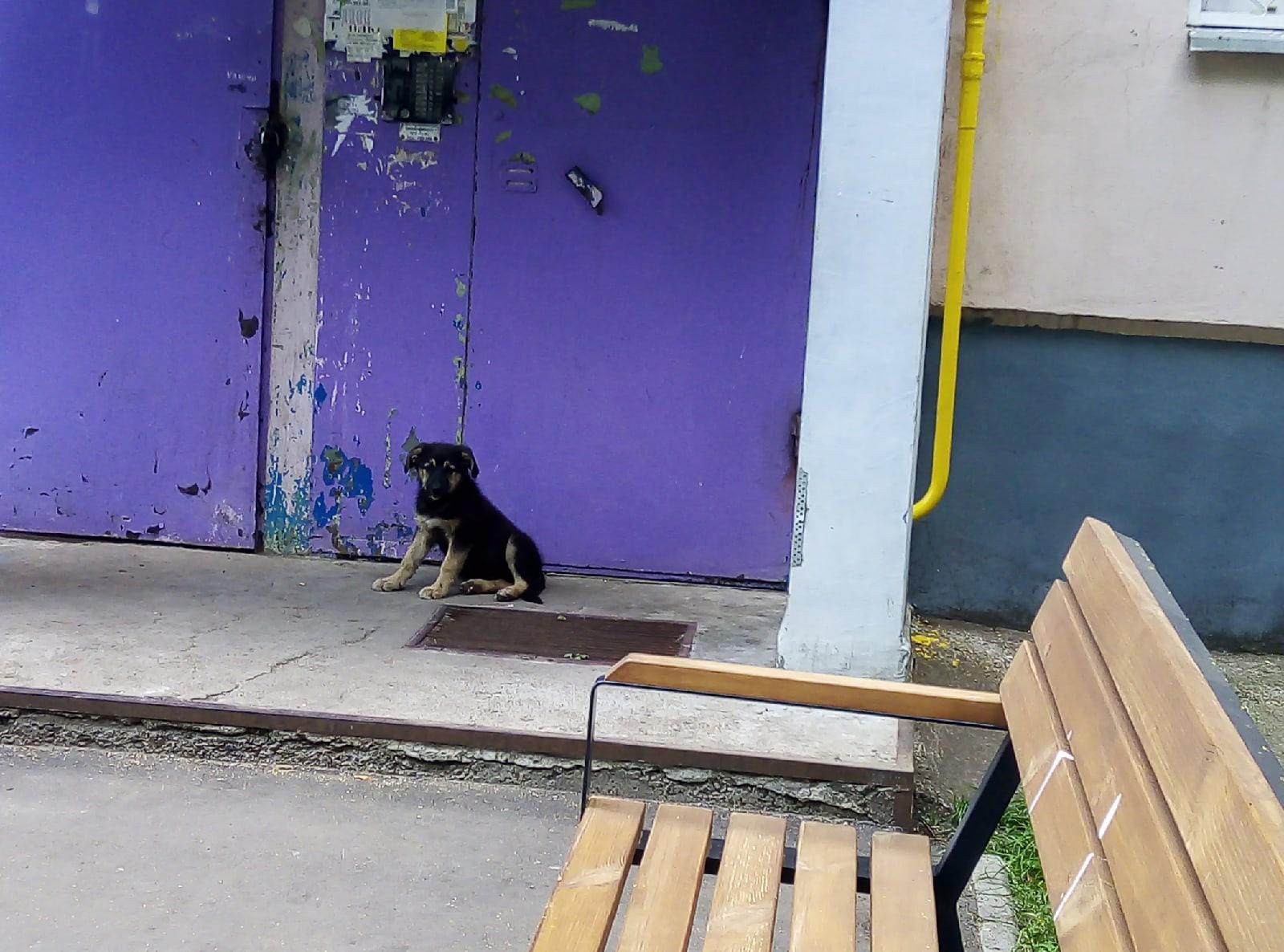 Добрый день! В 1 комплексе появились щенки.